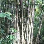 Bamboo Cu Chi tunnels